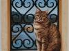 chat à la fenêtre III